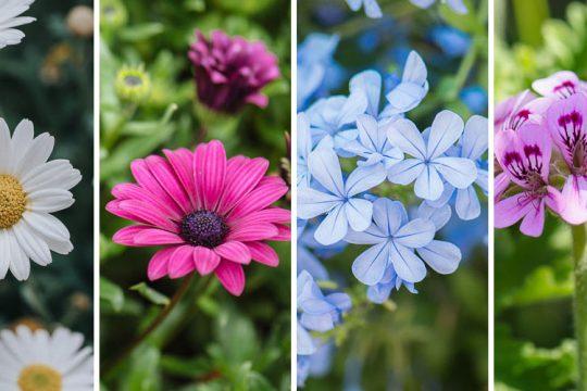 Φυτά που ανθίζουν άνοιξη, καλοκαίρι και φθινόπωρο