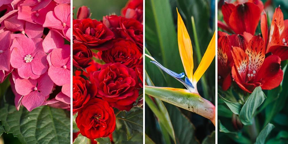 Τα 15 καλύτερα φυτά με υπέροχα λουλούδια για βάζο