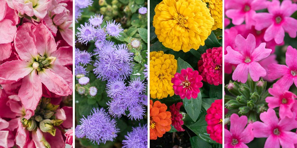 Τα 10 πιο όμορφα ανοιξιάτικα λουλούδια