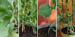 5 ανοιξιάτικα λαχανικά για να καλλιεργήσουμε σε γλάστρα