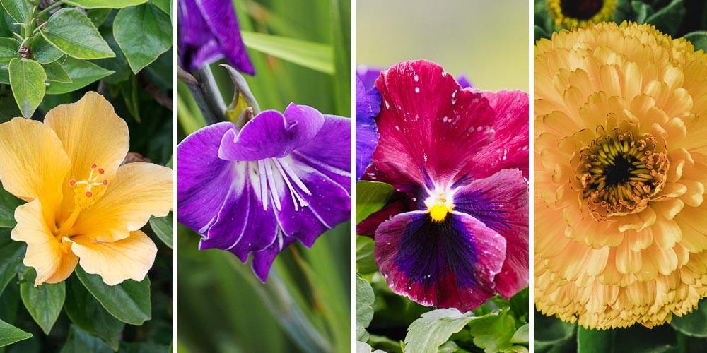 Εδώδιμα άνθη, 40 λουλούδια που τρώγονται