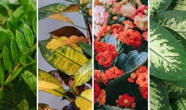 18 υπέροχα φυτά για γραφεία και επαγγελματικούς χώρους