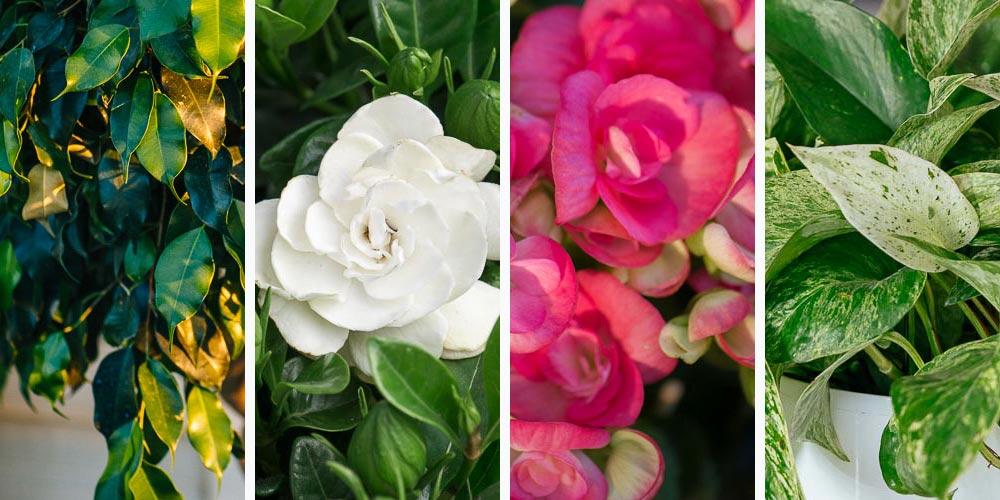 Καλλωπιστικά φυτά που μεγαλώνουν χωρίς χώμα