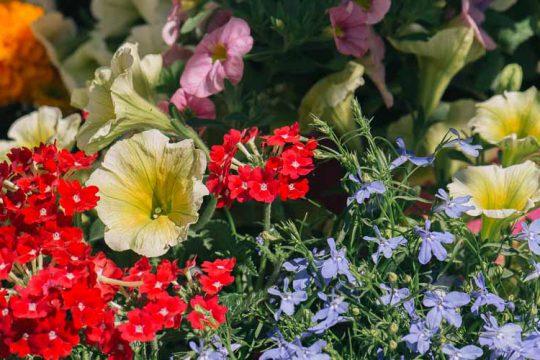 10 λουλούδια για το πρωτομαγιάτικο στεφάνι