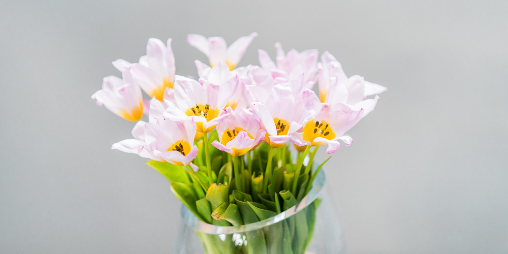 Πώς διατηρούμε τα λουλούδια σε βάζο για περισσότερες μέρες