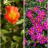 12 φυτά για κρεμαστές γλάστρες και καλάθια