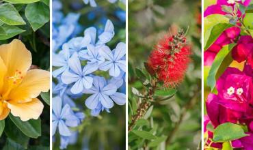 15 φυτά και λουλούδια που αντέχουν στον ήλιο και τη ζέστη