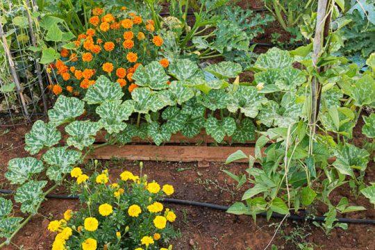 Ιούνιος, εργασίες στον κήπο