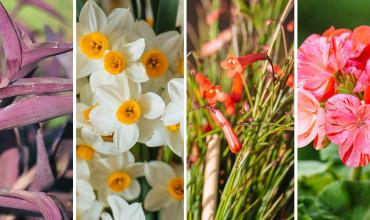 20 αγαπημένα λουλούδια από τις αυλές των γιαγιάδων μας