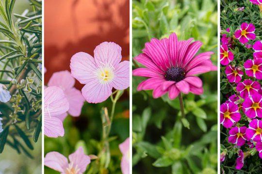10 υπέροχα φυτά για εδαφοκάλυψη