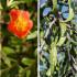 15 φυτά που θέλουν λίγο νερό