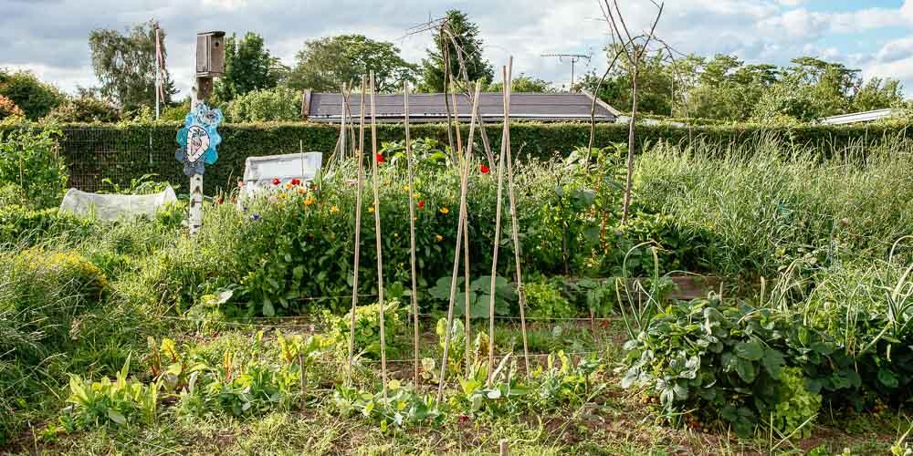 Ιούλιος, εργασίες στον κήπο