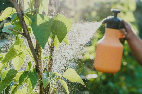 Πώς χρησιμοποιούμε τη μαγειρική σόδα στα φυτά του κήπου μας