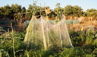 Αύγουστος, εργασίες στον κήπο