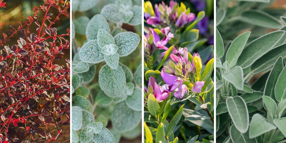 25 κατάλληλα φυτά για βραχόκηπο