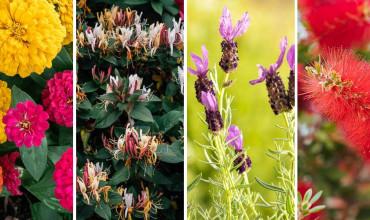 17 φυτά που προσελκύουν τις μέλισσες στον κήπο μας