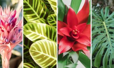 10 εξωτικά φυτά από τη ζούγκλα για το σπίτι μας