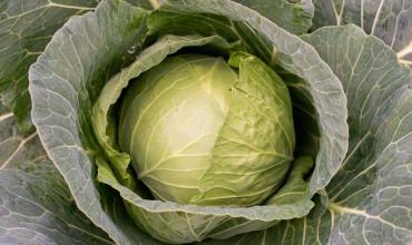 5 μυστικά για φύτευση και καλλιέργεια λάχανου