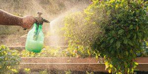 Πώς χρησιμοποιούμε το πράσινο σαπούνι στα φυτά