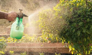 Πώς χρησιμοποιούμε το πράσινο σαπούνι στα φυτά του κήπου μας