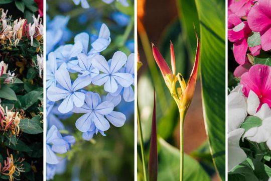 Υπέροχα λουλούδια για μπαλκόνι