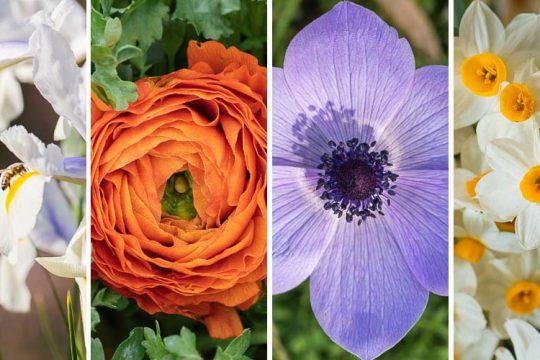 Βολβοί λουλουδιών που φυτεύουμε το φθινόπωρο