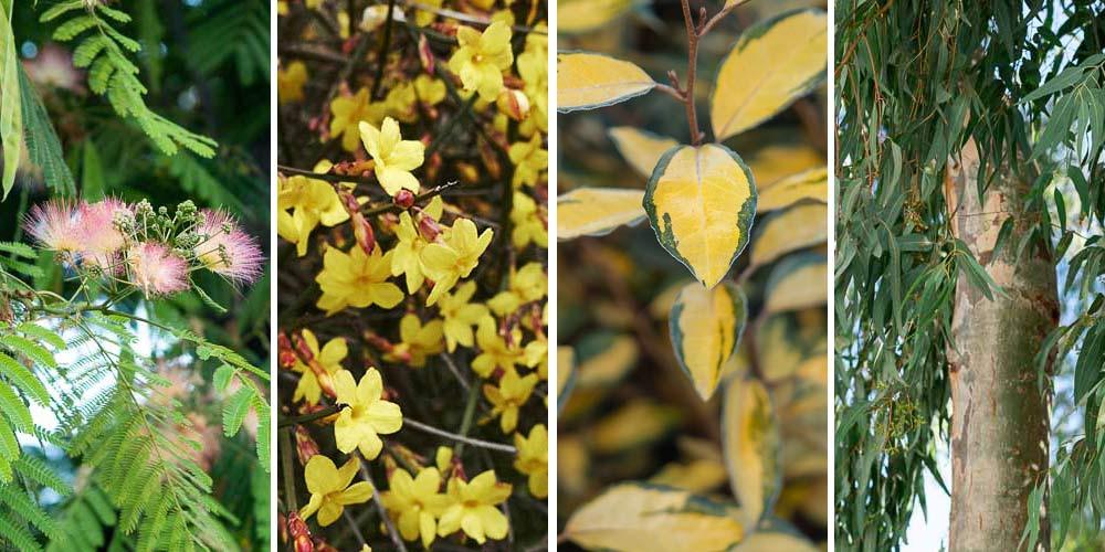 16 φυτά κατάλληλα για ξερά και άγονα εδάφη