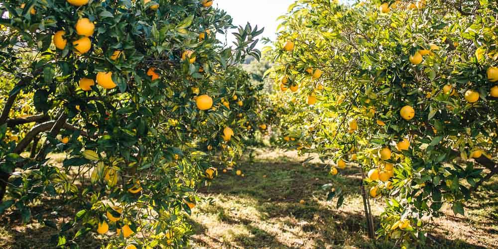 Νοέμβριος, εργασίες στον κήπο