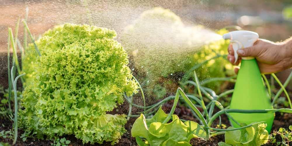 Πώς χρησιμοποιούμε το πιπέρι καγιέν στα φυτά του κήπου