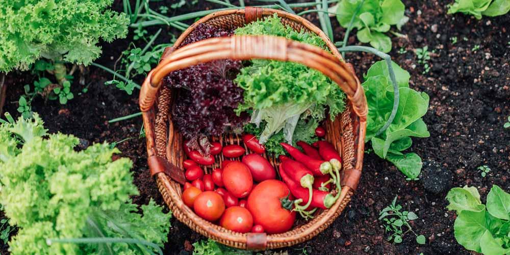 Πώς διατηρούμε φρέσκα τα λαχανικά για μεγαλύτερο χρονικό διάστημα