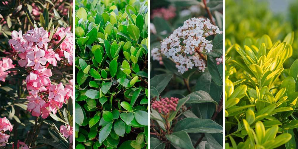 12 ανθεκτικά φυτά εξωτερικού χώρου για όλο τον χρόνο