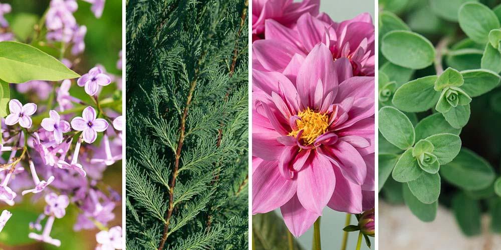 12 φυτά για μεγάλο υψόμετρο