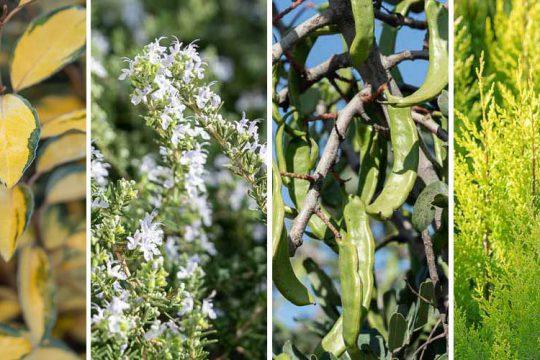 15 φυτά που αντέχουν στον αέρα