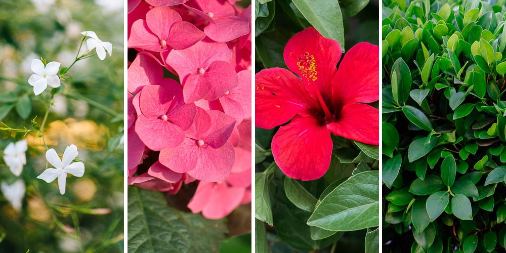 10 φυτά σε γλάστρα για είσοδο σπιτιού