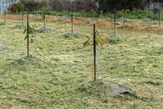 Ποια εποχή και πώς φυτεύουμε καρποφόρα δέντρα