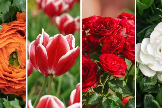 10 φυτά με υπέροχα λουλούδια για ανθοδέσμη