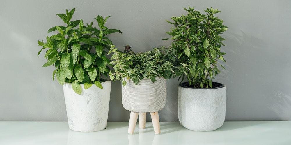 Αρωματικά φυτά και μυρωδικά σε γλάστρα