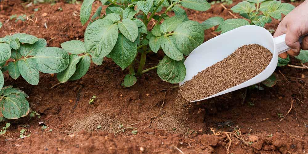 Τι προσφέρει το άζωτο ως λίπασμα σε φυτά και καλλιέργειες