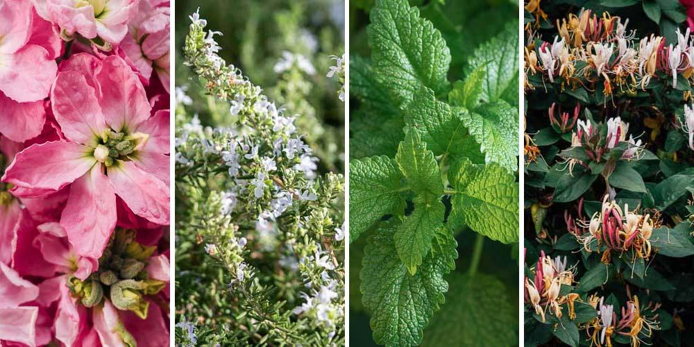 10 φυτά κατάλληλα για αιθέρια έλαια