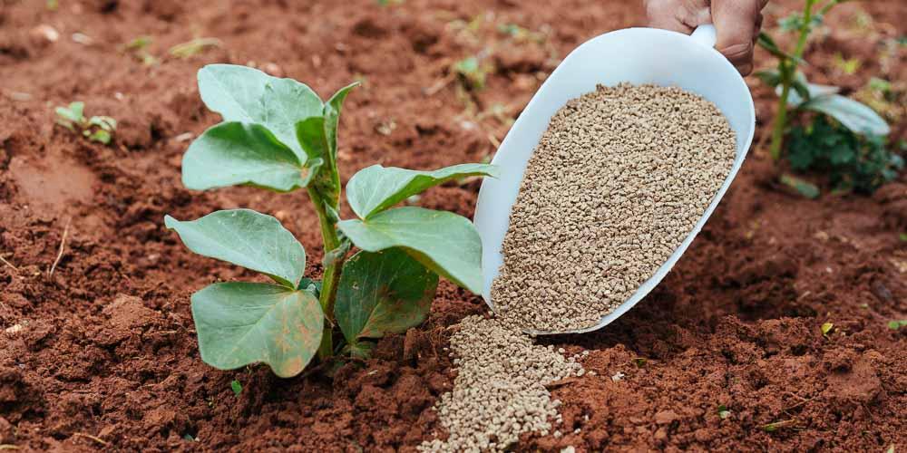 Τι προσφέρει ο φώσφορος ως λίπασμα σε φυτά και καλλιέργειες