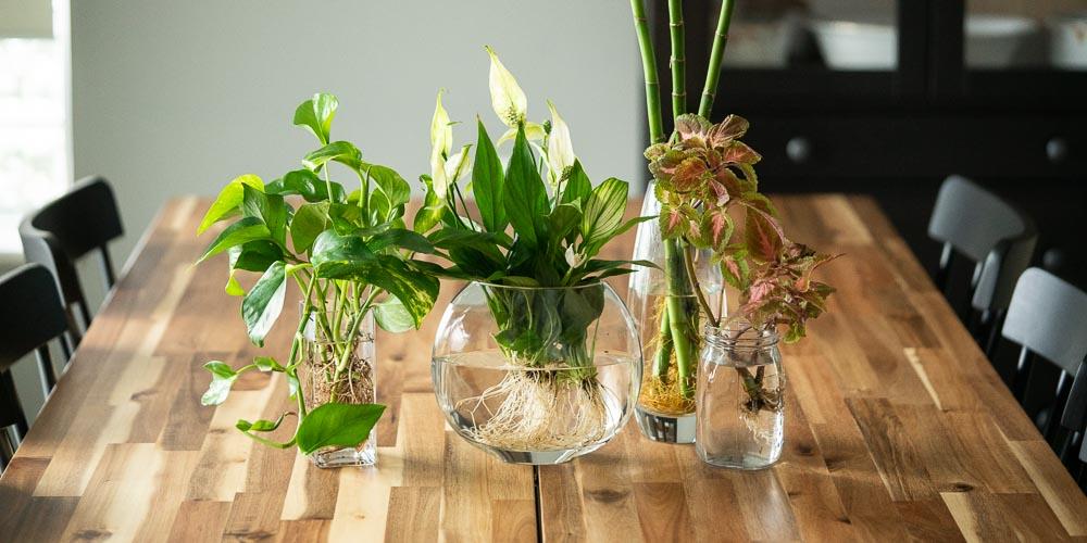 15 φυτά εσωτερικού χώρου που διατηρούνται σε νερό