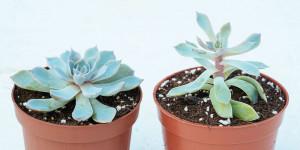 Εμφάνιστη λεπτής βλάστησης σε εχεβέρια που αναζητά φως
