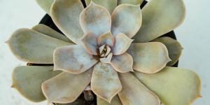 Νέα βλάστηση με πιο ανοιχτό χρώμα σε εχεβέρια