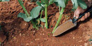 Κάλιο, τι προσφέρει ως λίπασμα σε φυτά και καλλιέργειες