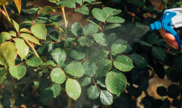 Πύρεθρο και φυσική πυρεθρίνη για προστασία από έντομα