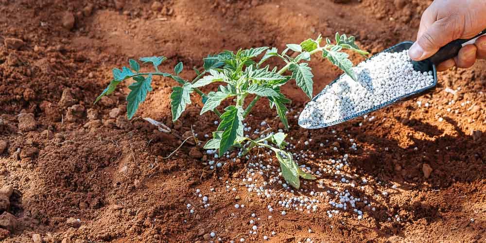 Ασβέστιο, τι προσφέρει ως λίπασμα σε φυτά και καλλιέργειες