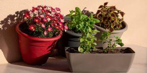 Πως επιλέγουμε γλάστρες για τα φυτά