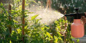 10 φυσικά και βιολογικά εντομοκτόνα για φυτά και καλλιέργειες