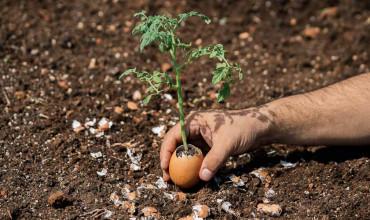 Τσόφλι αυγού στα φυτά και χρήσεις στον κήπο