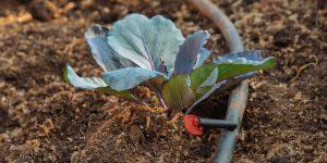 Αυτόματο πότισμα για κήπο και για γλάστρες